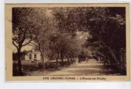 CARNAC PLAGE - L'Avenue Des Druides - Très Bon état - Carnac