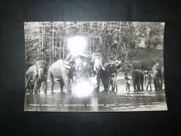 Sri Lanka Ceylon     Temple Elephants At Katugastota River - Sri Lanka (Ceylon)