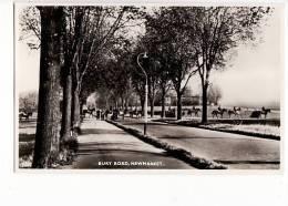 Angleterre - Bury Road, Newmarket (Chevaux,horses) - Non Classés