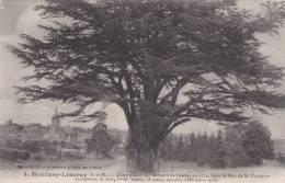 Montigny-Lencoup - Cèdre Planté Par Bernard De Jussieu Dans Le Parc De M. Trudaine [10081M77] - France
