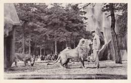 CPSM 9X14 Du Jardin ZOOLOGIQUE De VINCENNES - Le LION PACHA Et Son DOMPTEUR - Lions