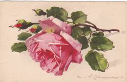CARD KLEIN  ROSA   -FP-N-2-0882-15224 - Klein, Catharina