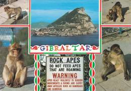 Cp , ROYAUME-UNI , GIBRALTAR From The Straits And Rock Apes - Gibraltar
