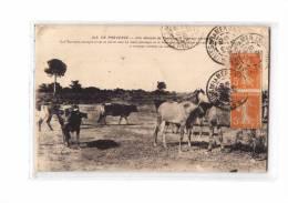 13 30 Types, Camargue, Manade De Taureaux, Chevaux Sauvages, Ed LA 313, Provence, 1923 - Non Classés