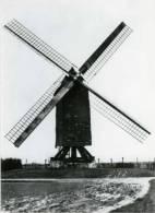 HUISE Bij Zingem (O.Vl.) - Molen/moulin - Zeldzame Close-up Van De Gewezen Roygemmolen Kort Voor Zijn Verdwijning - Zingem