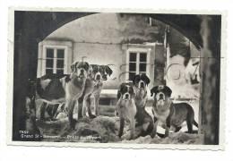 Bourg-Saint-Pierre (Suisse, Valais) : Les Chiens De L´hospice Du Grand Saint-Bernard Env 1930 (animée). - VS Wallis