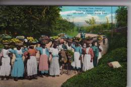 Jamaica Jamaique Post Card Greetings From Jamica Going To Market With Yama And Canes Constant Spring Road - Cartes Postales