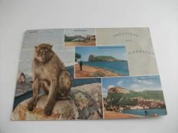 Scimmia Gibraltar Gibilterra  Vedute - Gibilterra