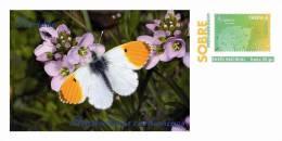 Spain 2013 - Butterflies Species Of The World Special Cover - Schmetterlinge