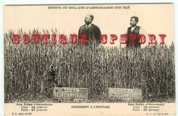 AGRICULTURE - PUBLICITE ENGRAIS Pour BLE  Sulfate D'Ammoniaque - Culture Céréale - Paysan Agriculteur - Dos Scanné - Agricoltura