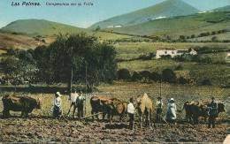 CPA ESPAGNE LAS PALMAS CAMPESINOS En La TRILLA BEL ATTELAGE Et CHAMEAU!!!!!!!!!!!!! - La Palma