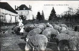 18 - SAINT AMAND  - LES MOUTONS DU BERRY - Saint-Amand-Montrond