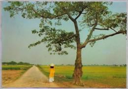 CPM - VIET-NAM - Qué Huöng - On The Ripe Rice-field - Viêt-Nam
