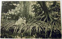 CARTOLINA COLOMBIA  MANGROVIE  MISSIONARIO 1943 - Colombia