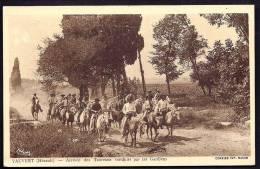 CPA ANCIENNE- FRANCE- VAUVERT (34)- ARRIVÉE DES TAUREAUX CONDUITS PAR LES GARDIANS- TRES BELLE ANIMATION GROS PLAN - Francia