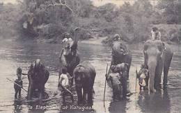 TEMPLE ELEPHANTS AT   KATUGASTOTO, CEYLON - Elephants