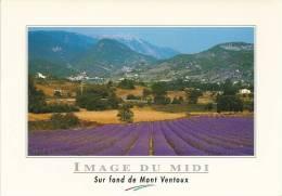 Sur Fond De MONT VENTOUX. - France