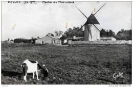 17-ILE De RE-  Moulin (à Vent) Du Morinand-cpsm- Chèvre - Ile De Ré