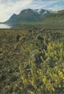 BELLA CARTOLINA  ISLANDA  FROM BERUFJOROUR E  ICELAND - Islanda