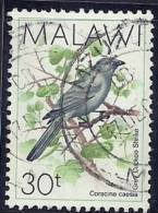 Malawi 1988 Birds Aves Oiseaux Vegels - Cuckooshrikes - Grey Cuckoo-shrike - Coracina Caesia Canc - Cuckoos & Turacos