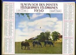 Calendrier 1950 , Double Cartonnage, Pâturage, Vaches. - Grand Format : 1941-60