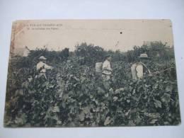 La Vie Au Grand Air 15 - Le Sulfatage Des Vignes (Fabrication Du Muscadet) - Nantes