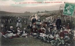 Cpa  , Au Pays Du Champagne , Scenes De Vendanges , Belle Animations - Folklore