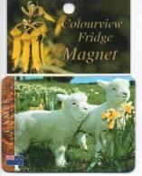 Schapen Moutons Sheep Schafe Lambs Lam New Zealand Magneet Magnet Magnete - Animaux & Faune