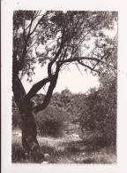 ( 83 ) GINASSERVIS - Altri Comuni