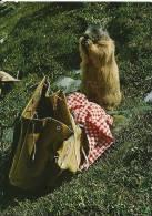 "Marmotte / Murmeltier / Marmot -""Gute Sachen, Gibt Es"" - Animaux & Faune"
