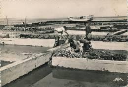 LE CHAPUS - Parcs à Huîtres (1948) - Francia