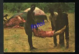 OLD POSTCARD ELEPHANT IVORY HUNTERS ANGOLA  AFRICA CARTE POSTALE - Angola