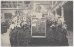 17426g HORTICULTURE - ETABLISSEMENT MADOUX-BRASSINE - Orchidées - Avenue De La Chasse Royale - Auderghem - 1911 - Oudergem - Auderghem