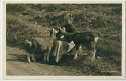 Dame Et Chèvres / Frau Und Ziegen / Lady And Goats - Idyll Am Bergweg - Animaux & Faune