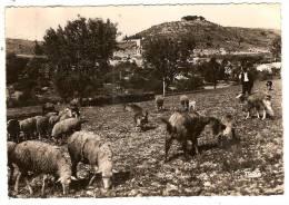 Riez, Vue Générale, Carrara - Tabac, éd. Mar N° 1898, Troupeau De Moutons Et Chèvres Berger - France