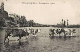 VARAMBON PASSAGE DES VACHES 01 AIN - Frankrijk
