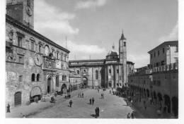 """Bellissima   Cartolina    Anni  50      """"  ASCOLI  PICENO - Piazza Del Popolo  """" - Ascoli Piceno"""