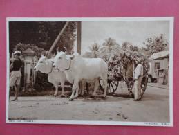 America > Antilles > Trinidad   B.W.I.  Ox Cart--ref 865 - Trinidad