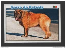 POSTCARD PORTUGAL SERRA DA ESTRELA DOG MOUNTAIN DOGS PERROS CHEINS CHIEN - Portugal