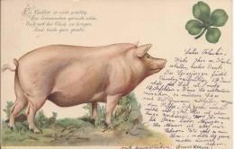 6563 - Cochon Et Trèfle à Quatre - Cochons