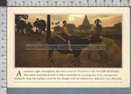 S472 THAILAND WATER BUFFALO HARD WORKING ANIMAL - Tailandia