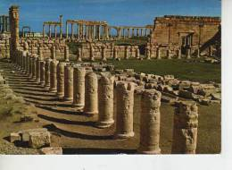 SYRIA  SIRIA  PALMIRA  OHL - Syrië