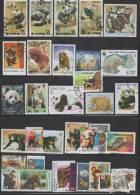 OURS PANDA KOALA (scan Limit TP OK !) - Ours