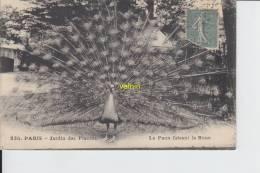 Paris Jardin Des Plantes  Le Paon Faisant La Roue - Vögel