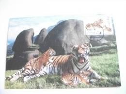 STORIA POSTALE 2 Cartoline Maximun Tigre Cina China - Storia Postale