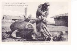 Souvenir De MACEDOINE  -  Maréchal-ferrant  -  Ferrant Un Buffle   SALONICA  -  Marshal Sholing Smith A Buffalo - Macédoine