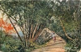 Réf : D-13-406 : Dominica A Pass Througt The Mountains - Dominique