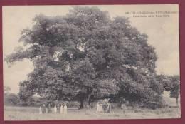 53 - 190313 - SAINT GEORGES SUR ERVE - Gros Chêne De La Retardière - - France