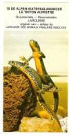 De Beukelaer Dieren 15. Alpen-watersalamander. Salamander, Salamandre, Triton - De Beukelaer