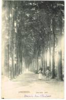 """Postkaart / Carte Postale """"Linkebeek - Une Belle Allée"""" - Linkebeek"""